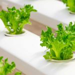 Hydroponics and undercover growing